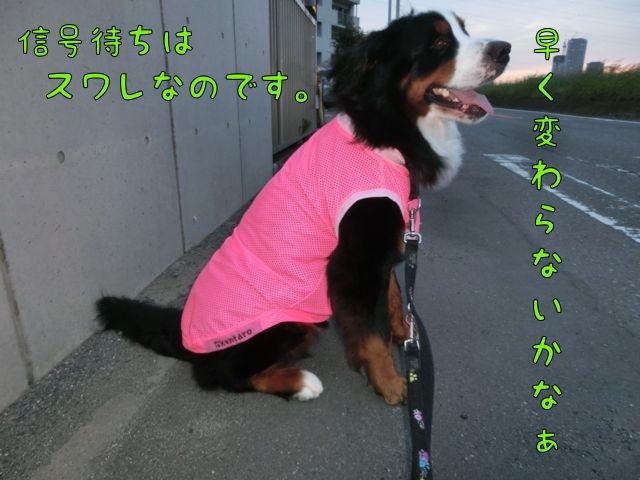 CIMG8298_20141010210818b61.jpg