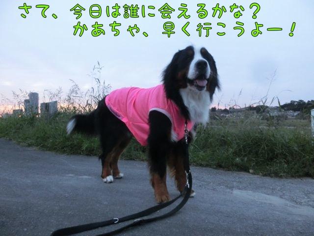 CIMG8304_20141010210819870.jpg