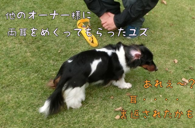 CIMG8460.jpg
