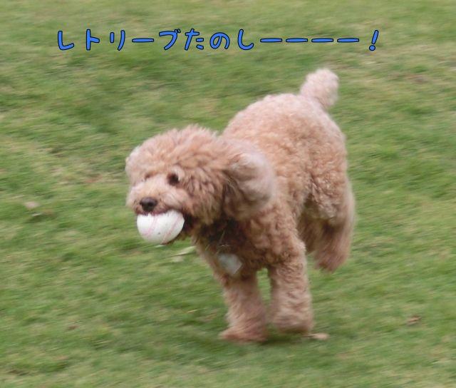 CIMG8467.jpg
