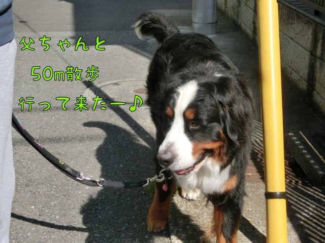 CIMG8761.jpg