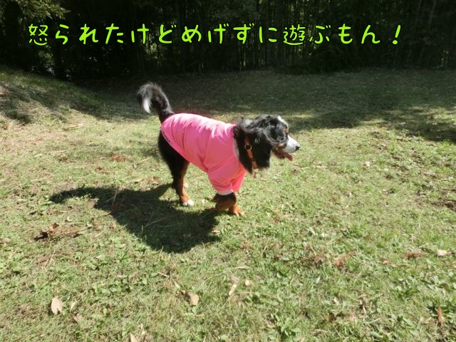 CIMG8805_20141020132613647.jpg