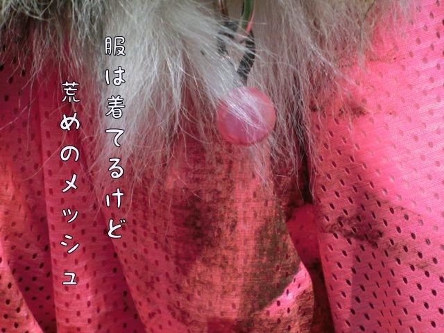 CIMG8852_20141020134155822.jpg