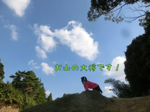 CIMG8911_20141020140342a6d.jpg