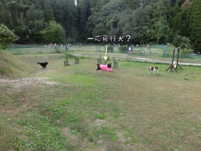 CIMG8946.jpg