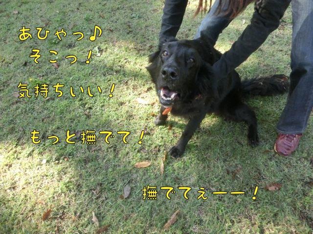 CIMG9142.jpg