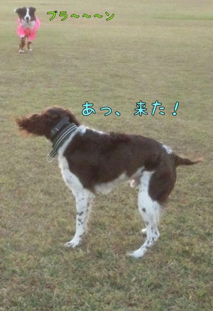 CIMG9333.jpg