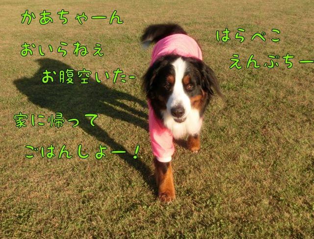 CIMG9403_2014102922554328f.jpg