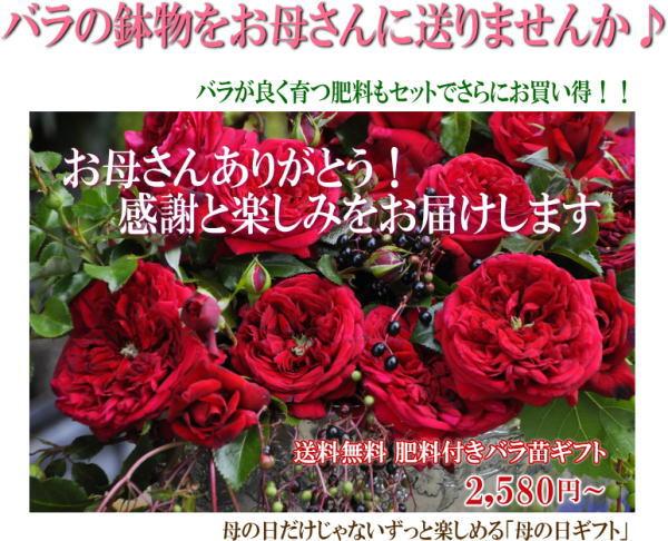 1_20130409174900.jpg