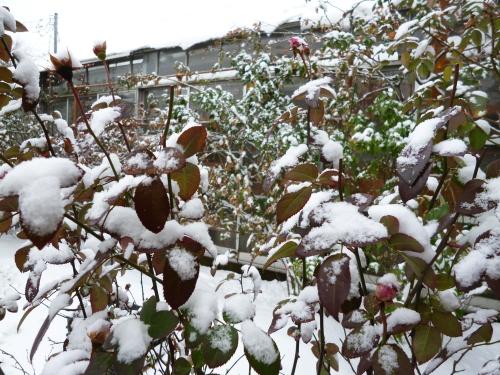 ブログ 雪の日2