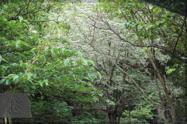 バナナワニ園 20130528