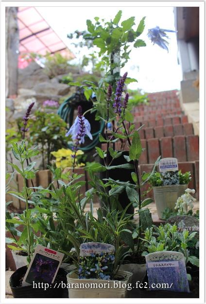 庭の花 おぎはら植物園
