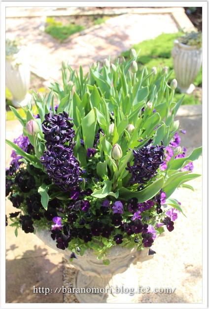 大鉢 20130415 庭の花