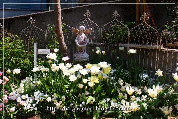 庭の花 20130429 ホワイトガーデン