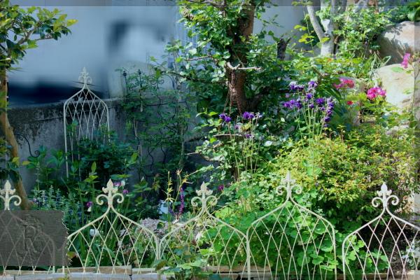 庭の花 擁壁上 20130514