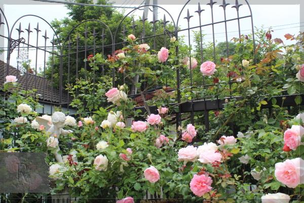 庭の花 バルコニー 20180519