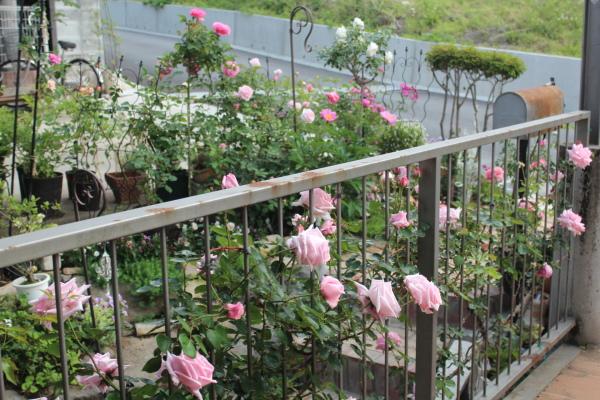 庭の花 20130521