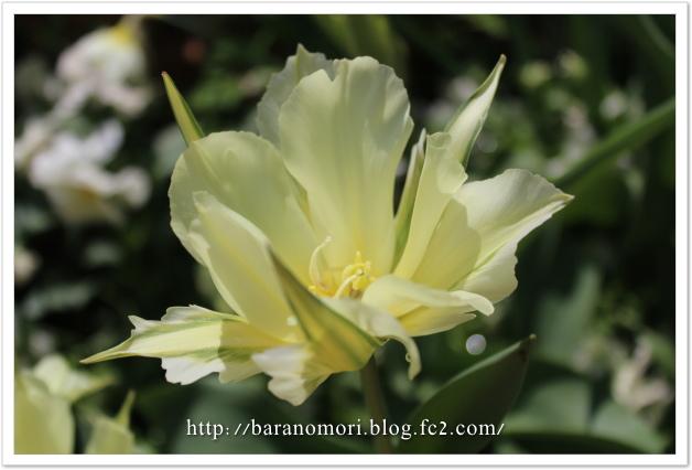 20130415 庭の花