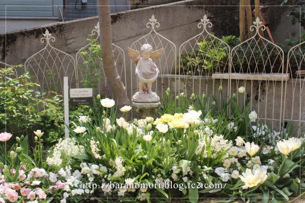 ホワイトガーデン 20130426 庭の花