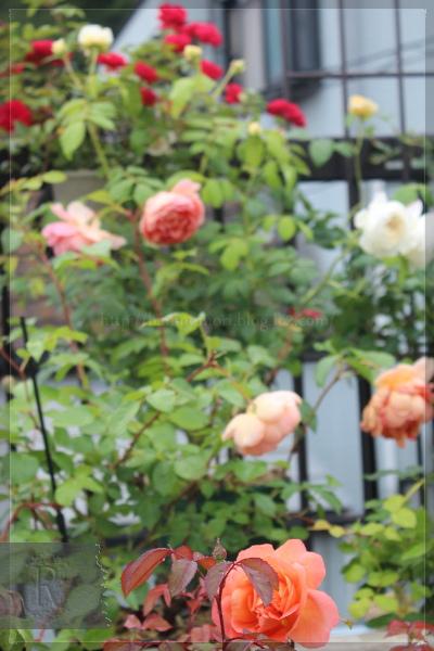 庭の花 バルコニー