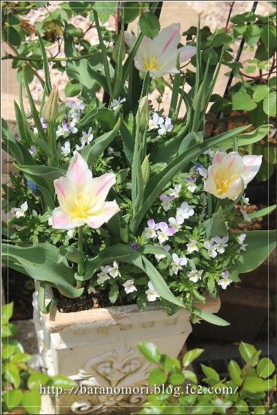 庭の花 寄せ植え