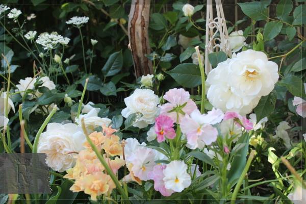 庭の花 寝室前 20130524