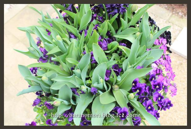 庭の花 大鉢 20130410