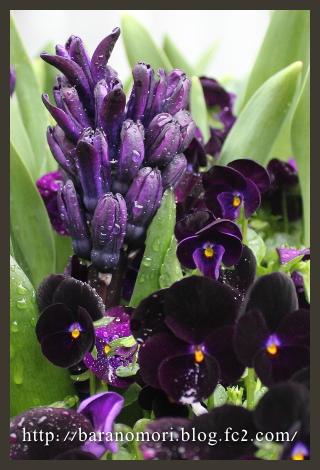 庭の花 大鉢 20130407