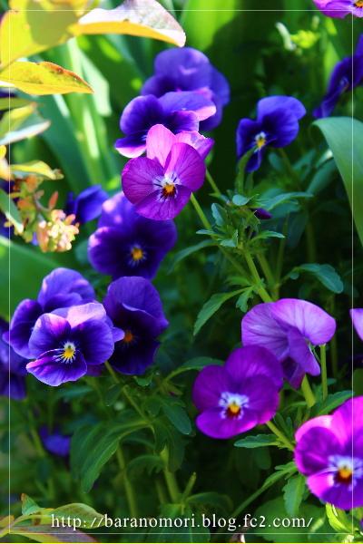 庭の花 20130429
