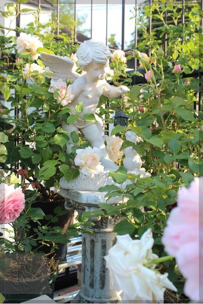 バルコニー 庭の花 20130517