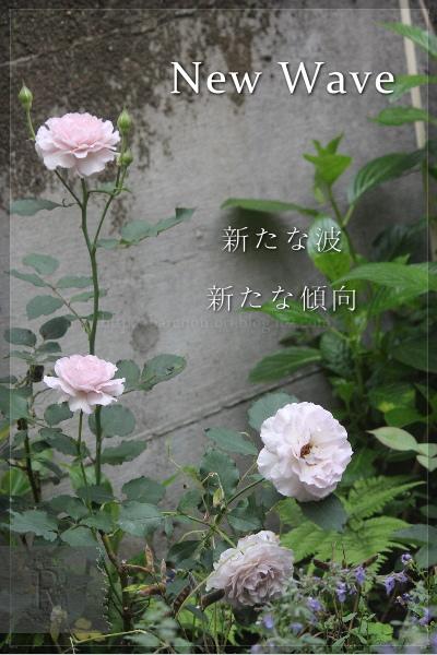 ニューウェーブ 20130620