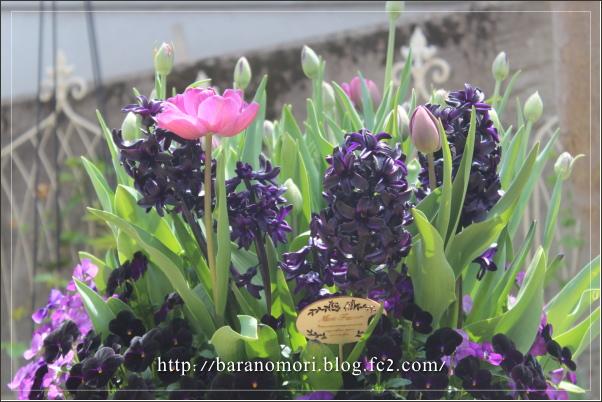 庭の花 20130417