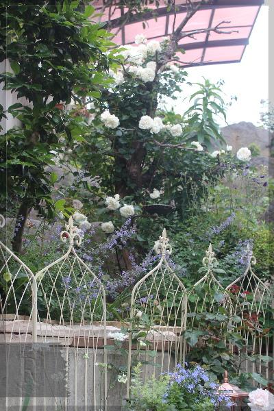 ホワイトメイディランド 20130601