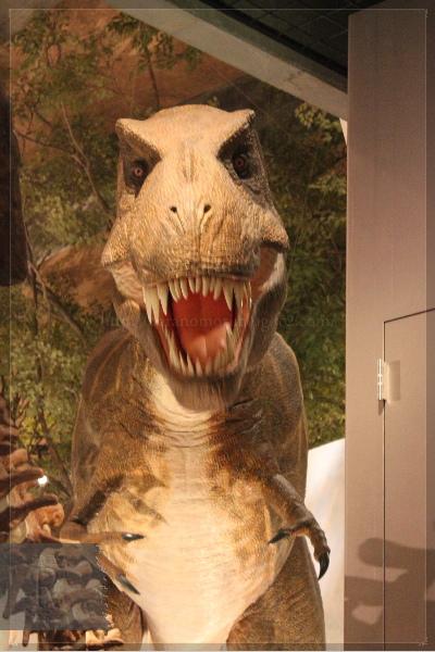 富岡 自然史博物館 20130609