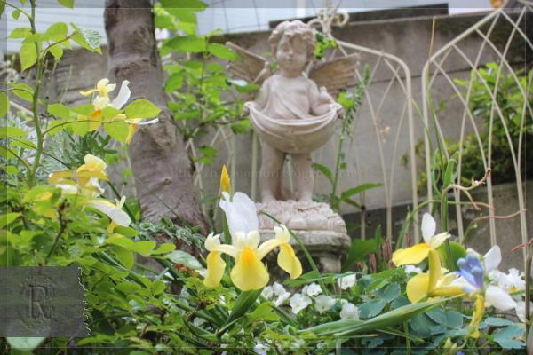 庭の花 ホワイトガーデン アイリス 20130530