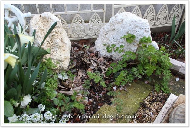 庭の花 20130410