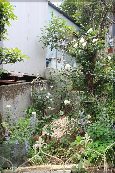 庭の花 擁壁上 20130525
