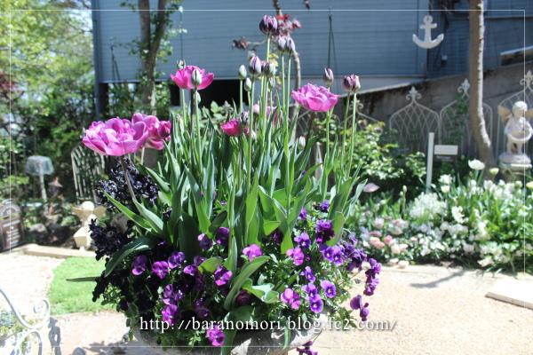庭の花 大鉢 20130425