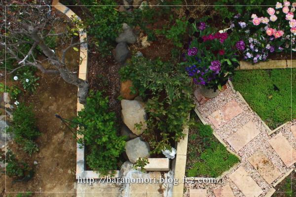 庭の花 20130430