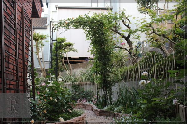 庭の花 擁壁下 20130517