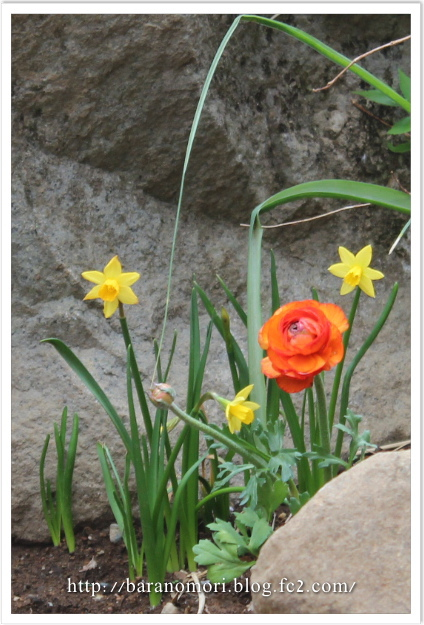 庭の花 オレンジ イエロー