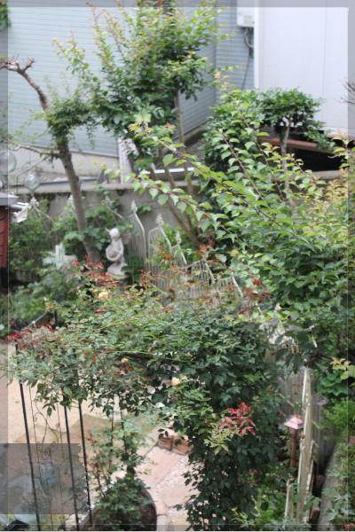 庭の花 20130628