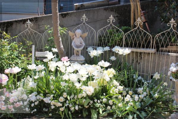 庭の花 ホワイトガーデン 20130504