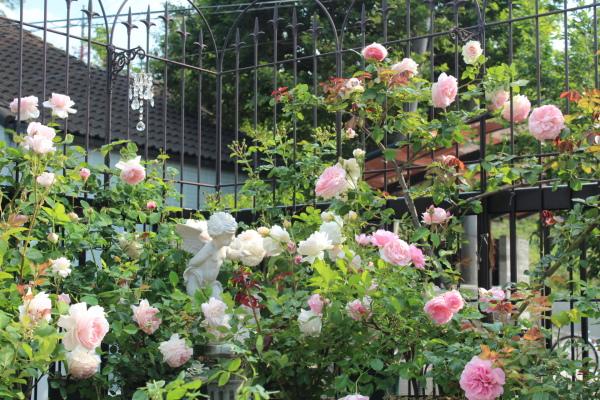 庭の花 バルコニー 20130521
