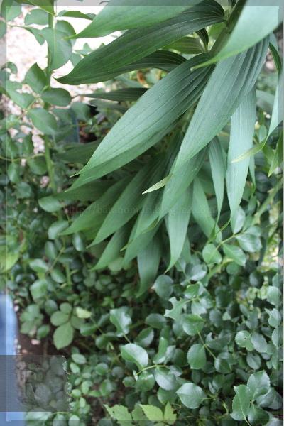 カサブランカ 庭の花 20130628