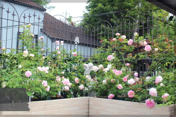 庭の花 20130520