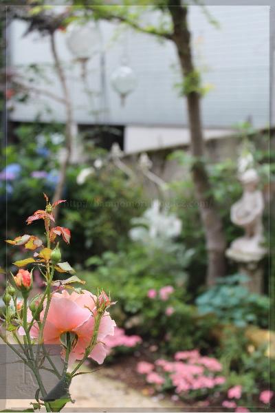 庭の花 20130619