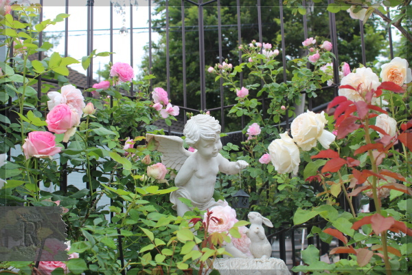 庭の花 バルコニー 20130527