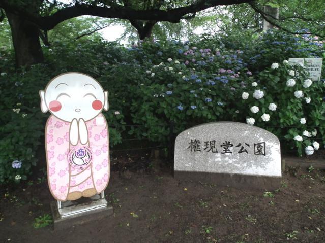 権現堂公園の紫陽花(1)