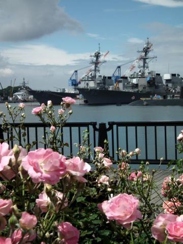 横須賀ヴェルニー公園の薔薇と海上自衛隊のフリゲート艦(1)